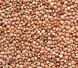 Lentil Seeds Redmoon Pulse