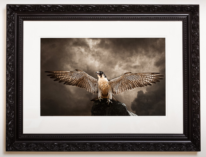 Falcon ornate frame.jpg