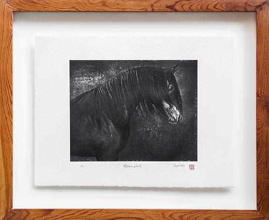 Arabian stallion print