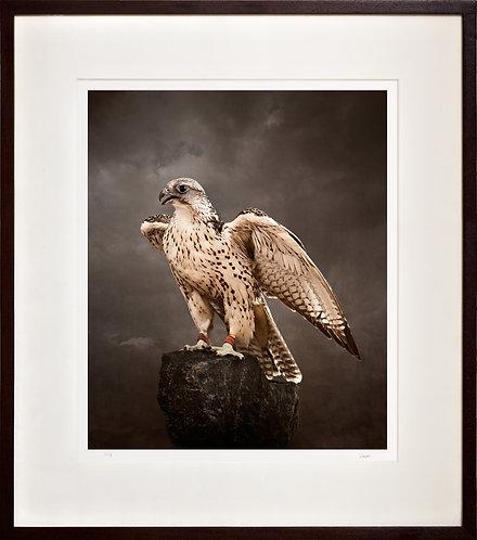 Saker Falcon (rock)