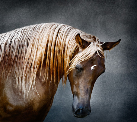 Photographing horses and falcons