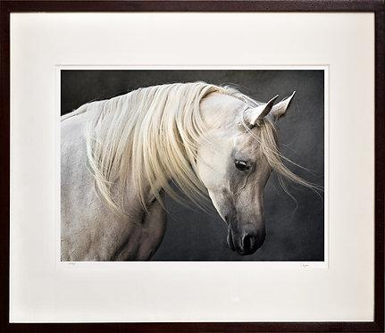 """""""Sheikha"""", Arabian mare"""