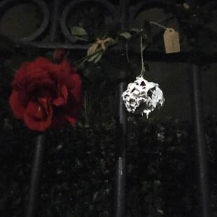 white-washed rose returned.jpg