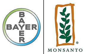 bayer-monsanto-1.jpg