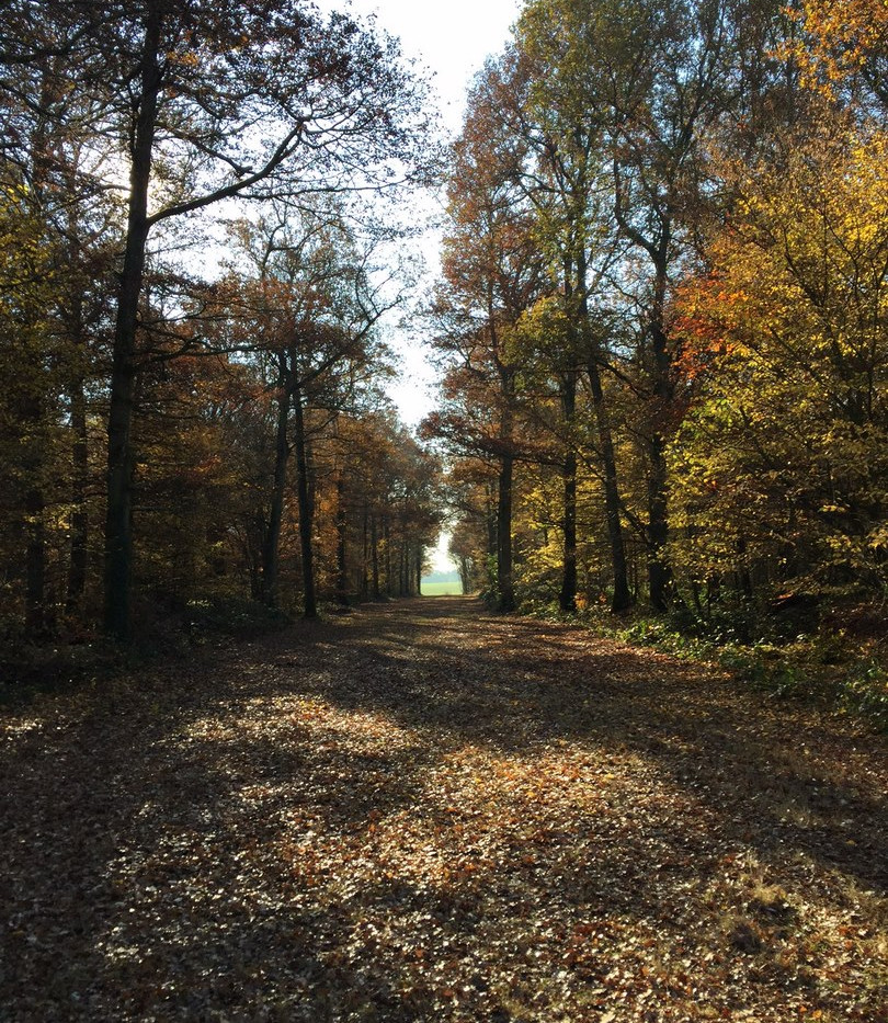 Forêt de Cernay