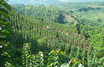 Indo Teak Plantation  (23).jpg