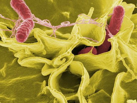 The Dangers of going Raw - Salmonella Infection
