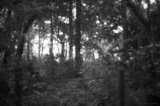 森の日の出
