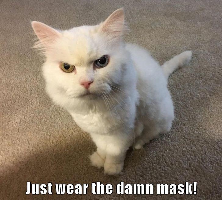 wear a mask 009.jfif