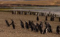 cabo dos bahias 1.jpg