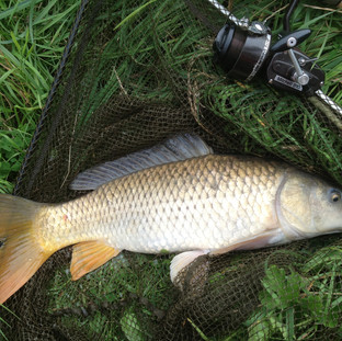 Beautiful Common, off the top