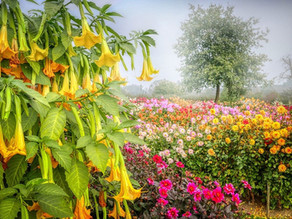 Nebelgarten