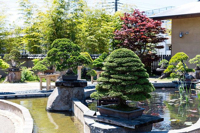 1-002 盆栽庭園 平行20170423.jpg
