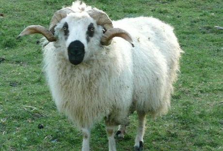 mouton domaine de revert