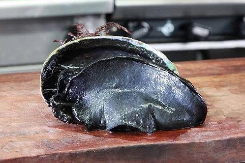 Black Paua (each350-400g)