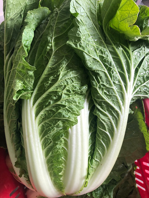 Chinese Cabbage each