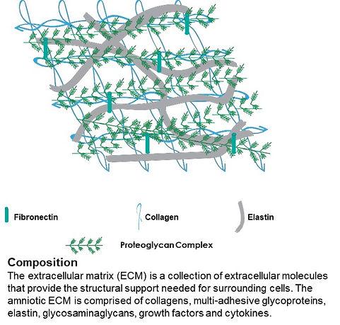 REVIV - Proteoglycan Complex.jpg