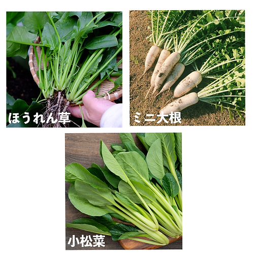 初めての食育畑プラン②