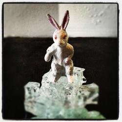Le dernier lapin