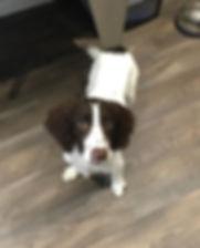 Impeccable Pets Dog Groomer, Solihul, B90, Shirey, Solihull Lodge