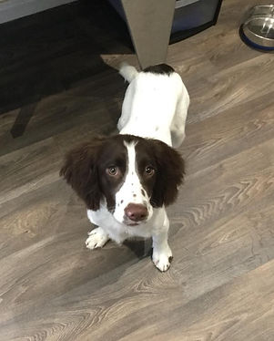 Impeccable Pets Dog Groomer, Solihul, B90, Shirey, Solihull Lodge