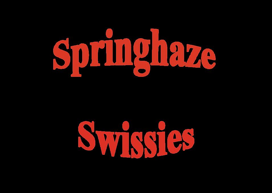 Springhaze head2_Artboard 1_Artboard 1.p
