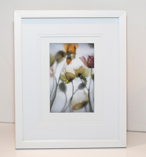 """Dancing Poppies""  (Framed Print)"