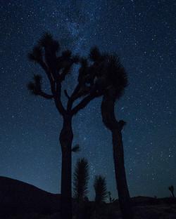 Joshua Trees with the Milky Way
