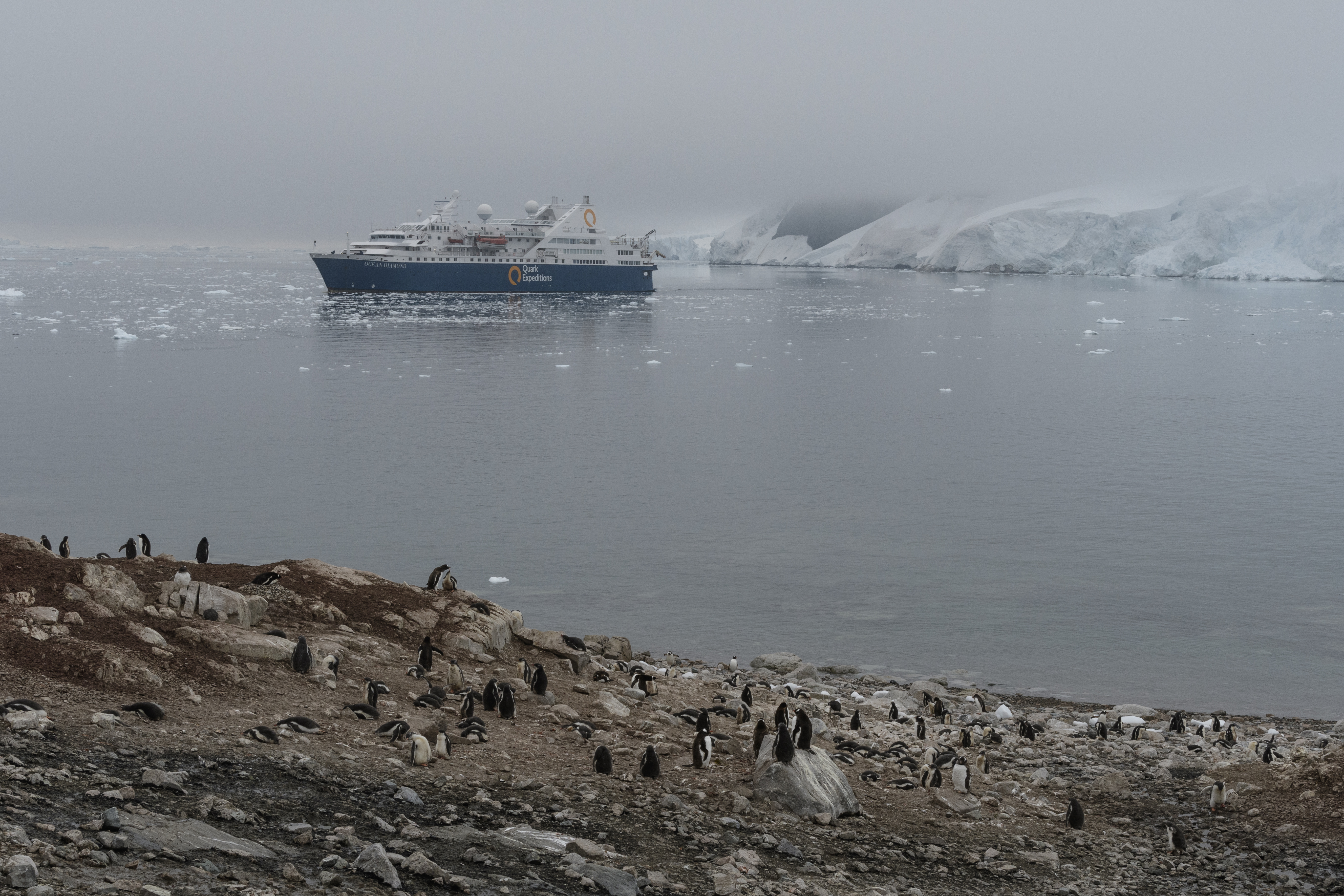 penguin colony with ship