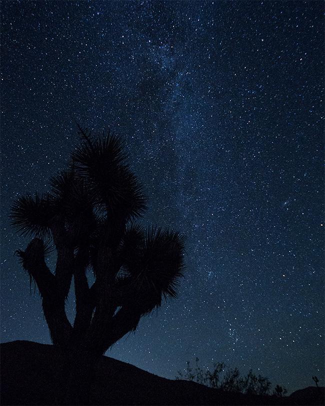 Joshua Tree with the Milky Way