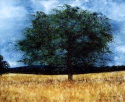 Ockley Oak