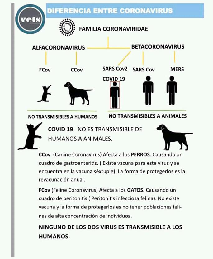 Diferencias entre los coronavirus que afectan a las mascotas y a los humanos.
