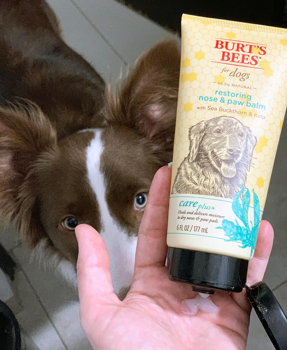 Gel humectante para cojinetes de las patas de perro.