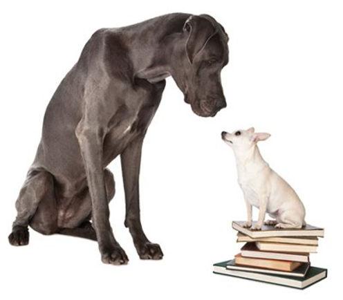 Professional Dog Training London, Ont