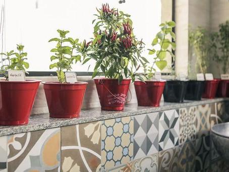 05 idéias para ter sua própria hortinha!