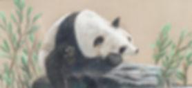 Pastel | Panda