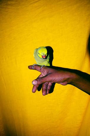 """""""The Lost Head & The Bird"""" by Sohrab Hura"""
