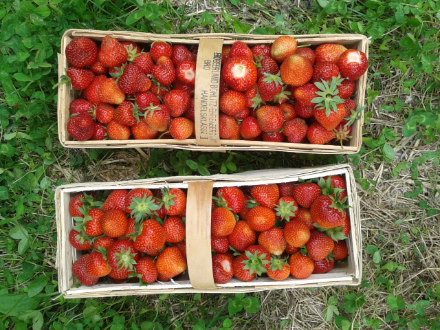 Juni ist Erdbeerzeit