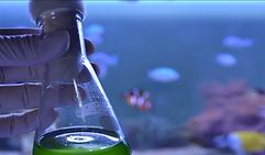 biochemical.png