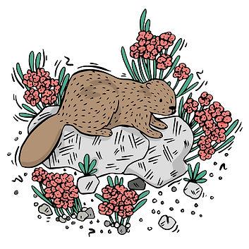 Beaver-01.jpg