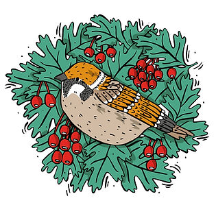 Tree Sparrow-01.jpg