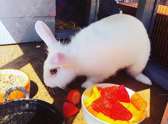 Domino magic rabbit.jpg
