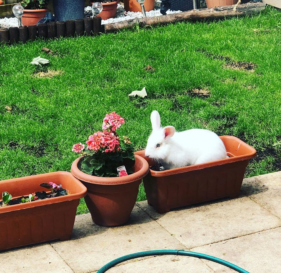 magic rabbit.jpg