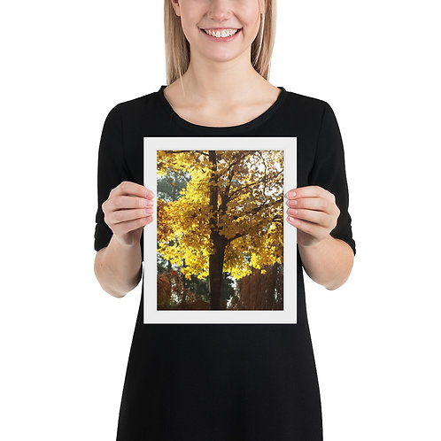 Fall Tree Framed photo paper