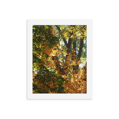 Fall Tree Color Framed photo