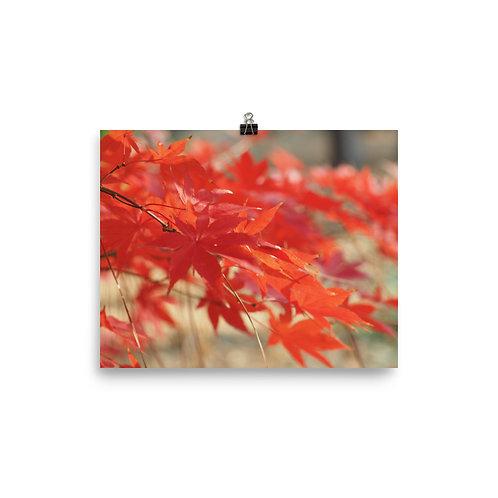 Maple Tree Print