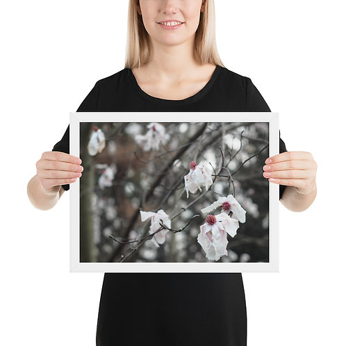 'Pink Parchment' Magnolia Tree Framed photo paper