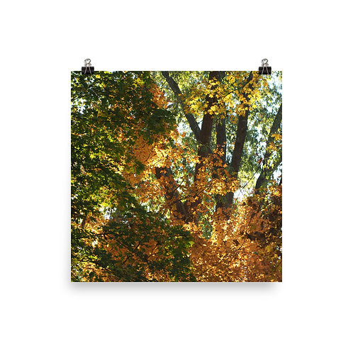 Fall Color Print