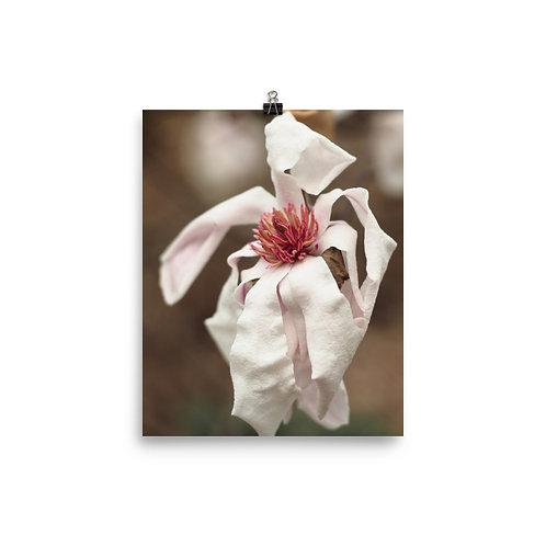 'Pink Parchment' Magnolia Print