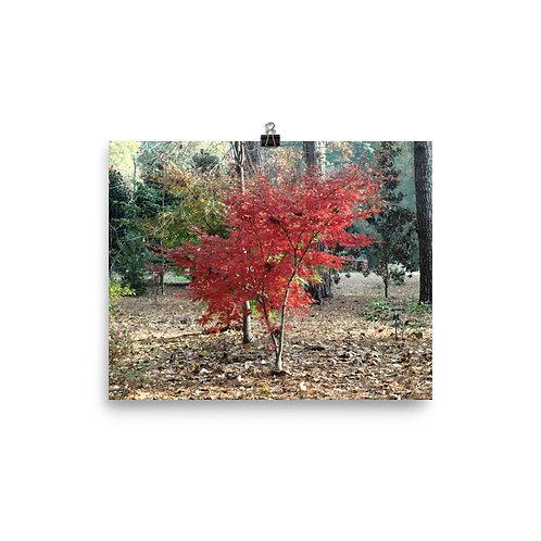 Fall Mape Tree Print